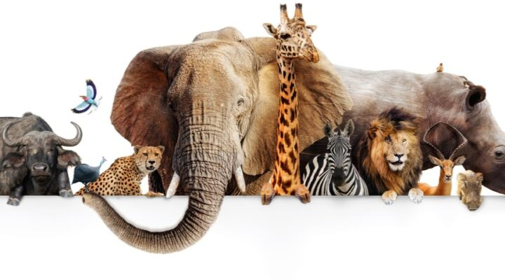 A montage of various African animals, including a buffalo, leopard, elephant, zebra, and lion.