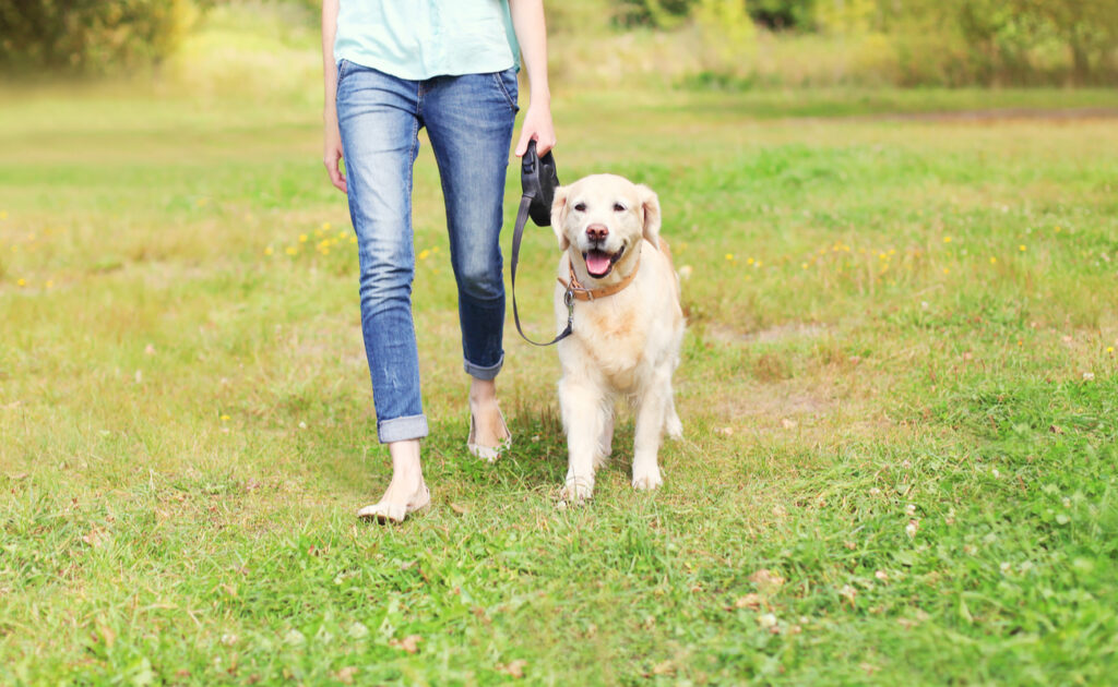 A woman walking a dog on the grass.