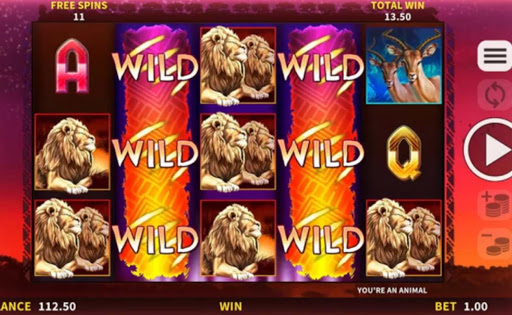 Animals of Africa online slot by DGC.