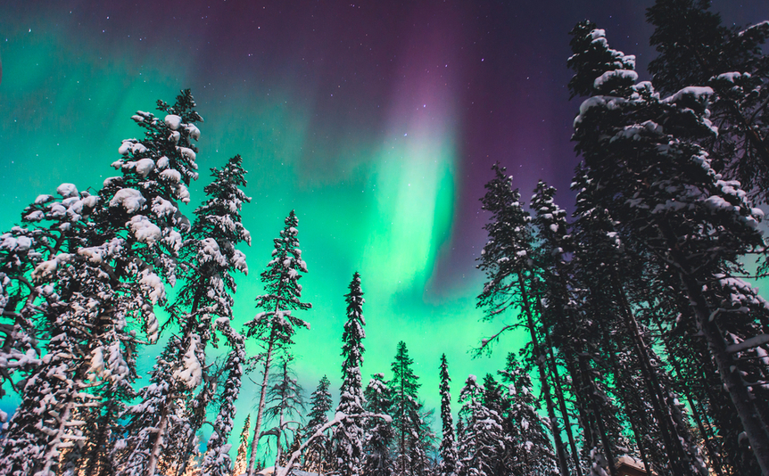 Snow-capped pine trees against the Northern Lights.