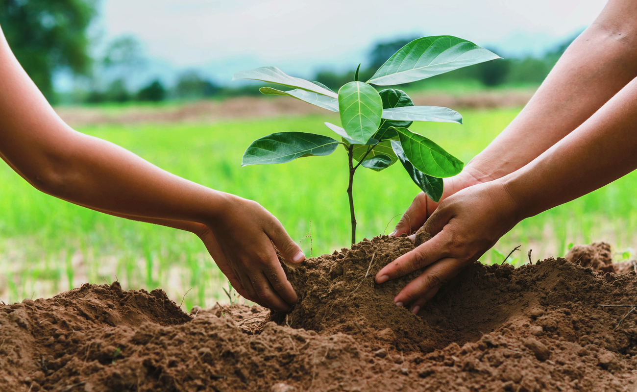 Close-up of two people's hands planting a sapling.