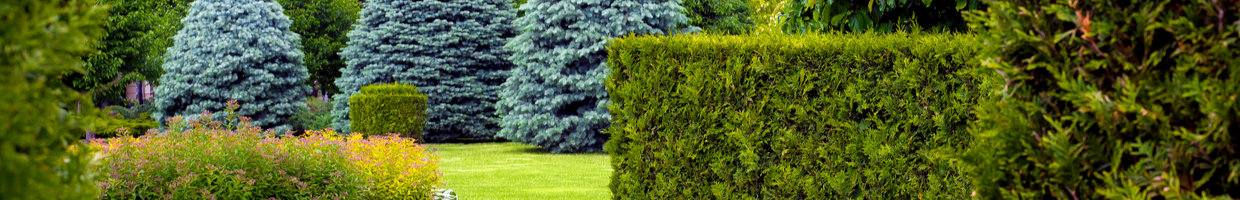 A garden of various evergreen trees and hedges.