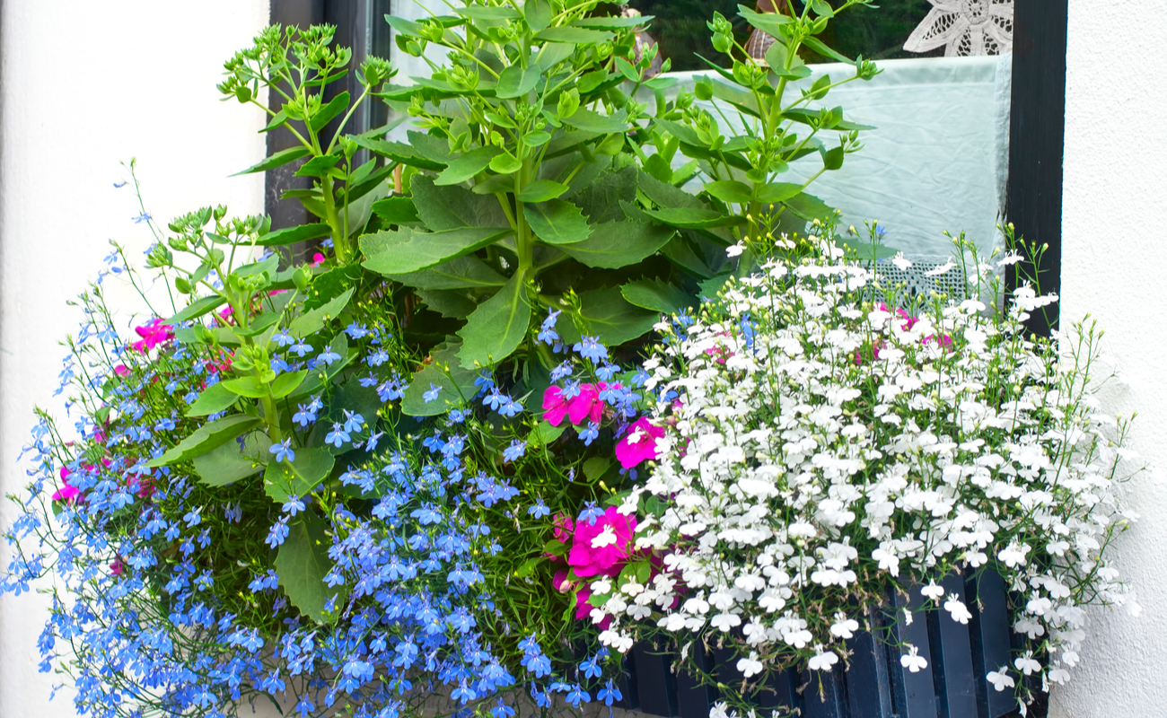 Window box of green, blue, pink and white plants and flowers.