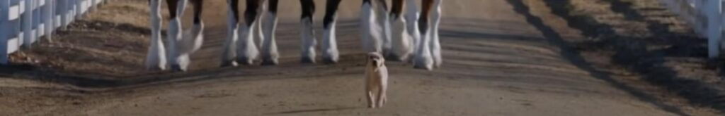 """The Budweiser """"Puppy Love"""" commercial from 2014 is one of the best Super Bowl ads of all time. (YouTube: Budweiser Brasil)"""